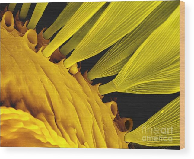 Scale Wood Print featuring the photograph Moth Scales, Sem by Louise Hughes
