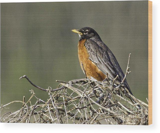 Songbird Wood Print featuring the photograph Watchful Eye by Jan Killian