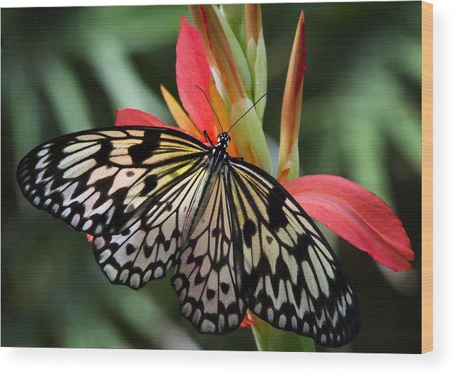 Paper Kite Butterfly Wood Print featuring the photograph Nature's Treasures by Saija Lehtonen