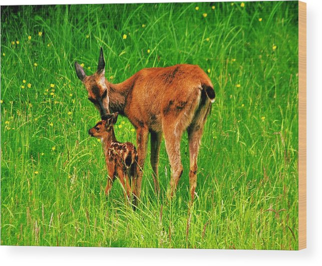 Deer Wood Print featuring the photograph Aww Mom by Benjamin Yeager