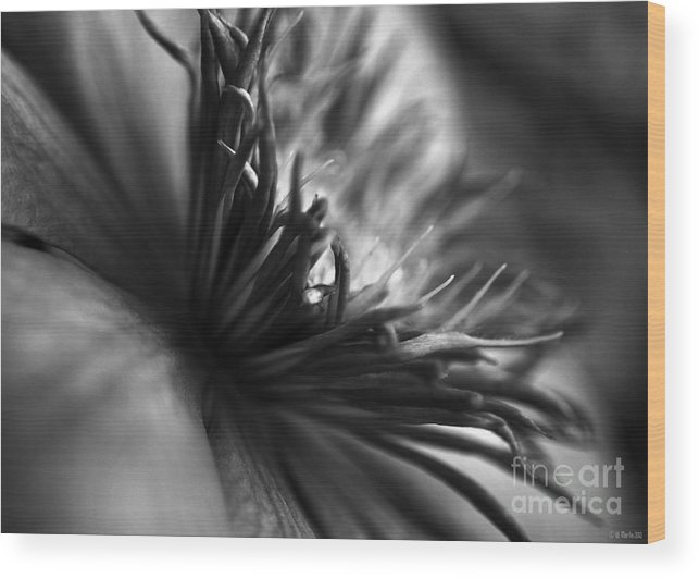 Clematis Wood Print featuring the photograph Clematis Macro In Black And White by William Martin