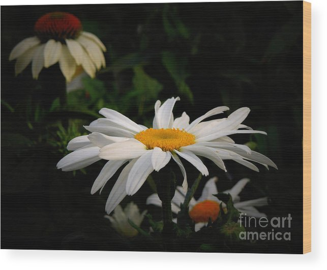 Flower Wood Print featuring the photograph Edge Of The Woods by Renee Trenholm