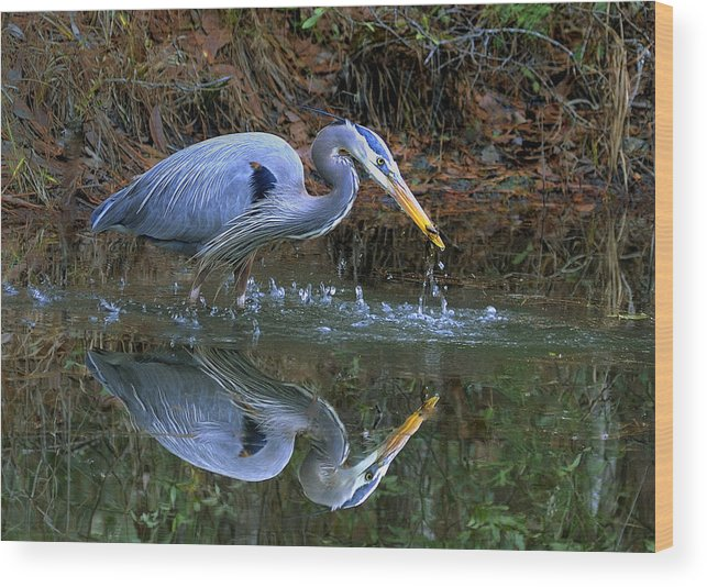 Blue Heron Wood Print featuring the photograph Great Blue Heron #1 by William McEvoy