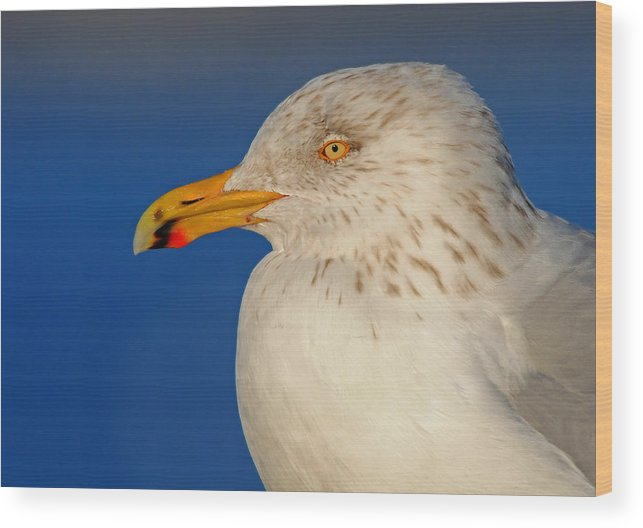 Gull Wood Print featuring the photograph Gull Portrait by Dave Mills