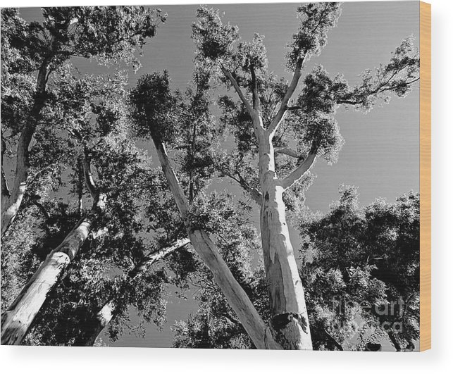 Trees Wood Print featuring the photograph Infrared Tree by Clare Bevan