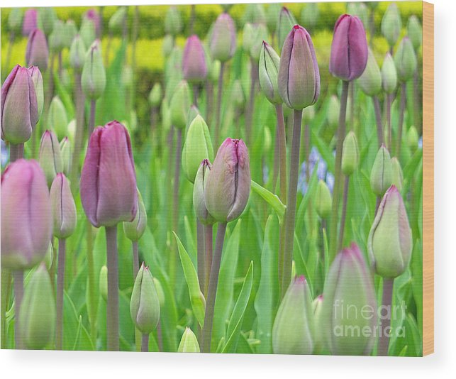 Keukenhof Gardens Wood Print featuring the photograph Keukenhof Gardens 12 by Mike Nellums