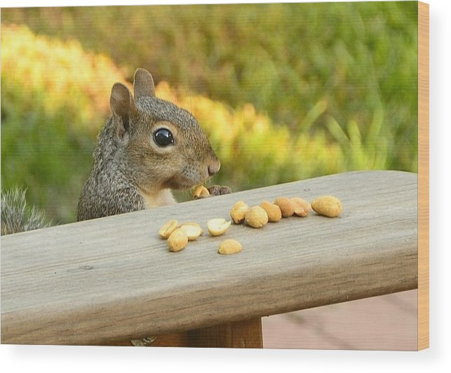 Squirrel Wood Print featuring the photograph Mr. Squirrel Goes To Lunch by Rick Adams