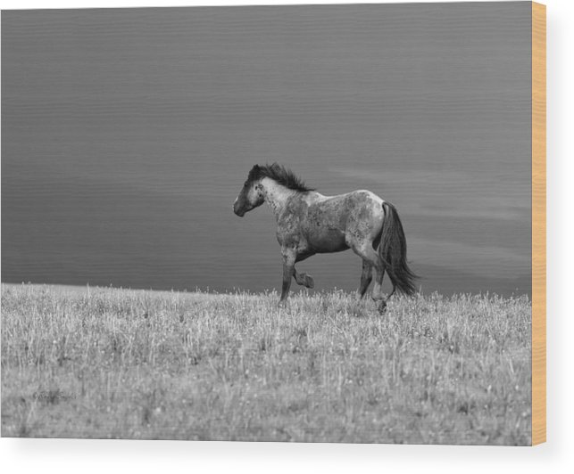 Beautiful Wood Print featuring the photograph Mustang 2 Bw by Roger Snyder