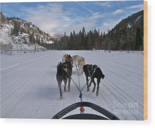 Dog Wood Print featuring the photograph Riding Through The Colorado Snow On A Husky Pulled Sled by Toula Mavridou-Messer