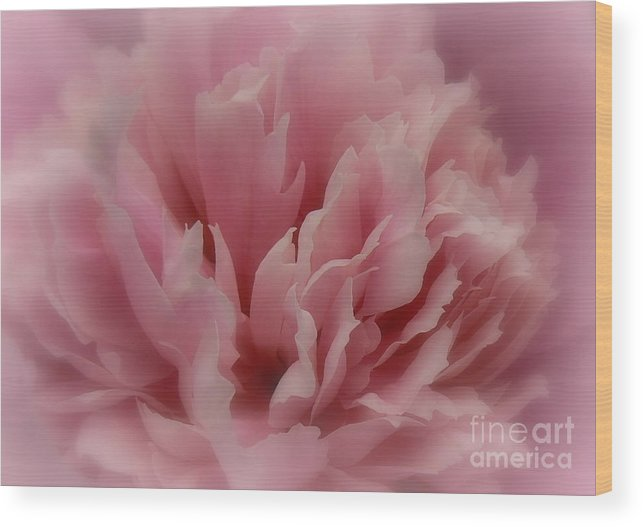 Peony Wood Print featuring the photograph Pink Peony Petals by Laura Louise