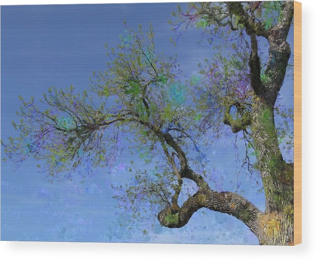 Tree Wood Print featuring the photograph Rainbow Aspirations by Susan Stephenson