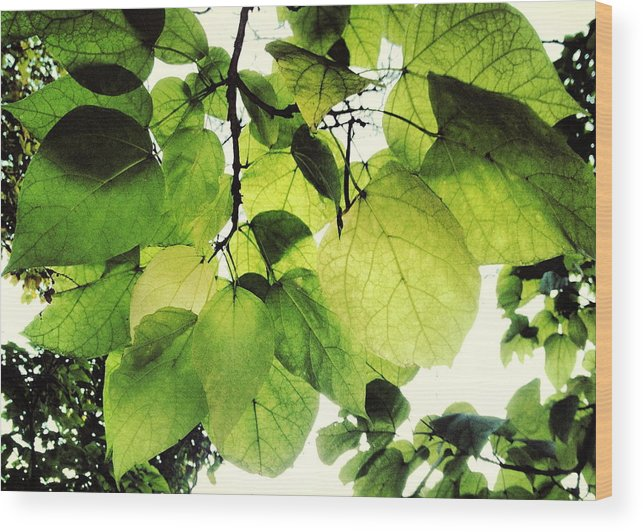 Leaf Wood Print featuring the photograph Catalpa Branch by Angela Rath