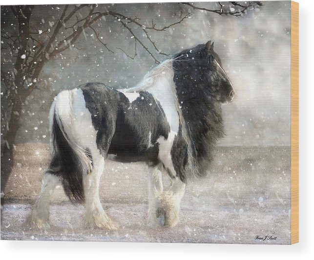 Horse Photographs Wood Print featuring the photograph Solitary by Fran J Scott