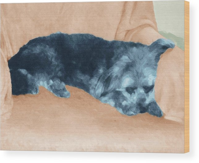 Dog Wood Print featuring the photograph Sweetee by Ginny Schmidt