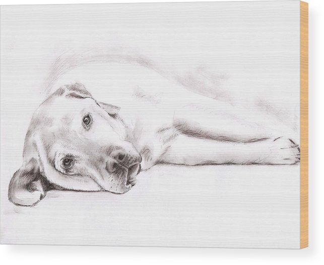 Dog Wood Print featuring the drawing Tired Labrador by Nicole Zeug