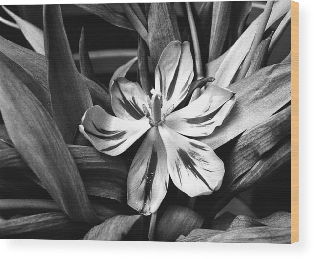 Flower Wood Print featuring the photograph Tussled by Will Gunadi