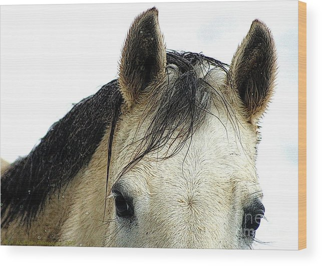 Equine Wood Print featuring the photograph Wet Snow by Ann Butler