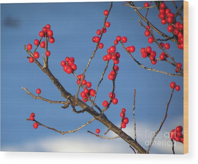 Flora Wood Print featuring the photograph Winter Berries by Lili Feinstein
