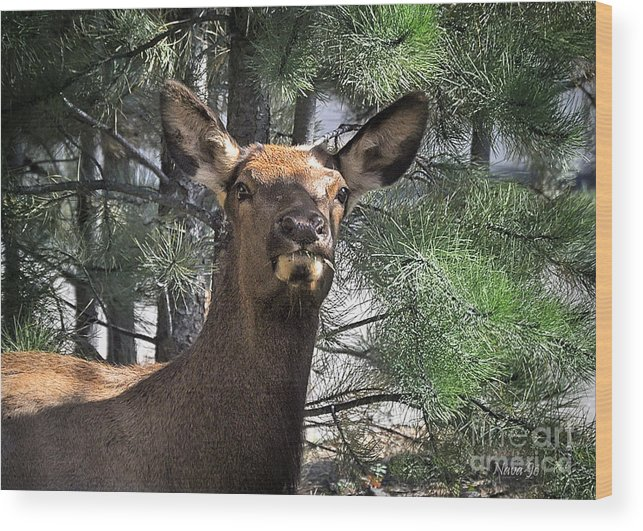 Nava Jo Thompson Wood Print featuring the photograph Colorado Elk by Nava Thompson