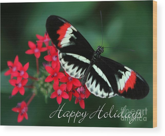 Butterfly Wood Print featuring the photograph Butterfly Holiday Card by Sabrina L Ryan