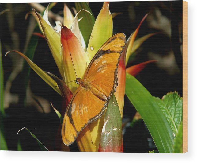 Butterfly Wood Print featuring the photograph Just Awesome by Wendell Brown