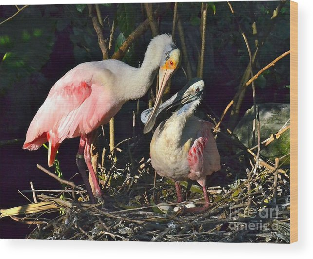 Spoonbill Wood Print featuring the photograph Love Is Grand by Carol Bradley