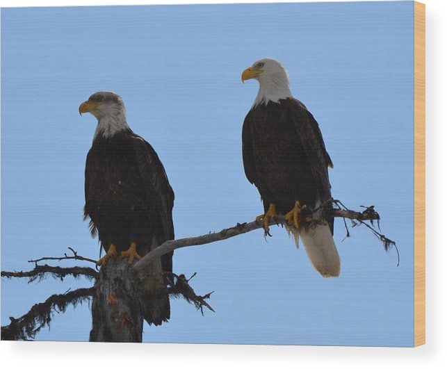 Eagle Wood Print featuring the photograph Old And Young by Jennifer Zirpoli