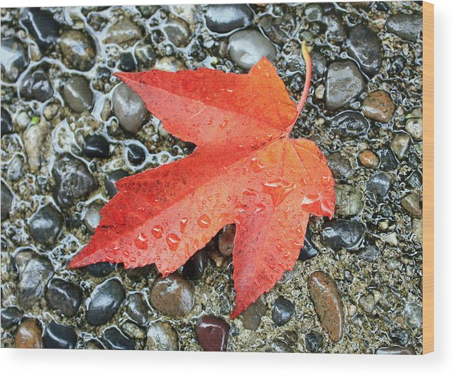 Fall Wood Print featuring the photograph Orange Leaf by Gerry Bates