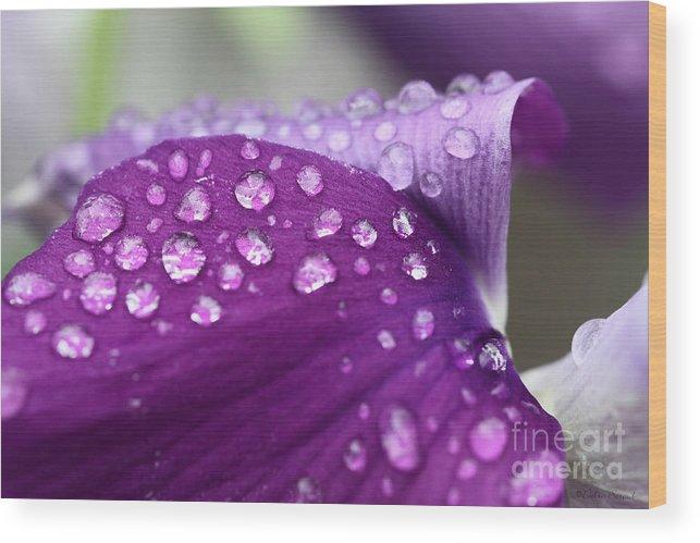 Raindrops Wood Print featuring the photograph Purple Rain by Debra Straub