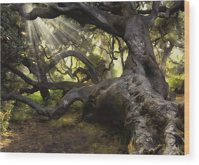 Oak Wood Print featuring the digital art Simply Old Oak by Sharon Foster