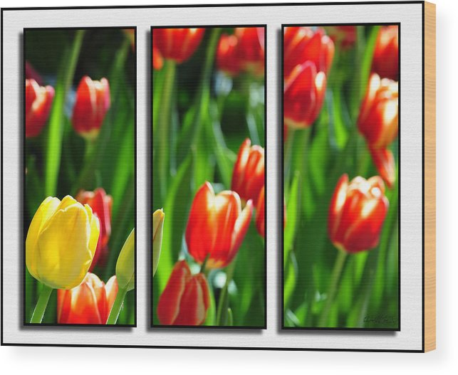 Wood Print featuring the photograph Spring Beauty Triptych Series by Michael Frank Jr