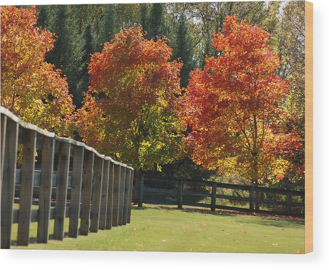 Trees Wood Print featuring the photograph Trees In Autumn by Optical Playground By MP Ray