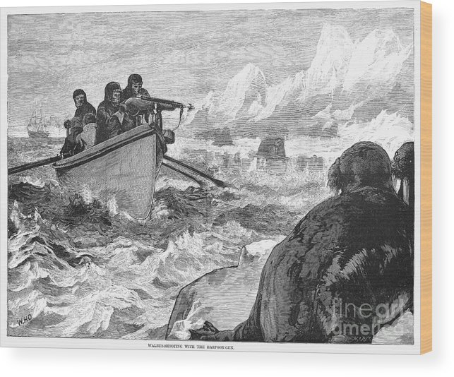 1875 Wood Print featuring the photograph Walrus Hunt, 1875 by Granger
