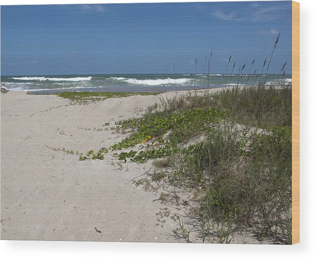 Railroad Wood Print featuring the photograph Railroad Vine And Sea Oats On The Atlantic In Florida by Allan Hughes