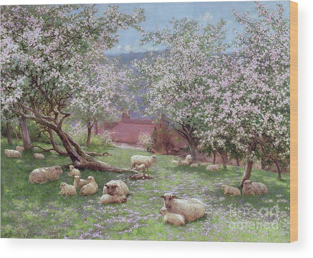 Appleblossom (w/c On Paper) By William Biscombe Gardner (1847-1919) Wood Print featuring the painting Appleblossom by William Biscombe Gardner