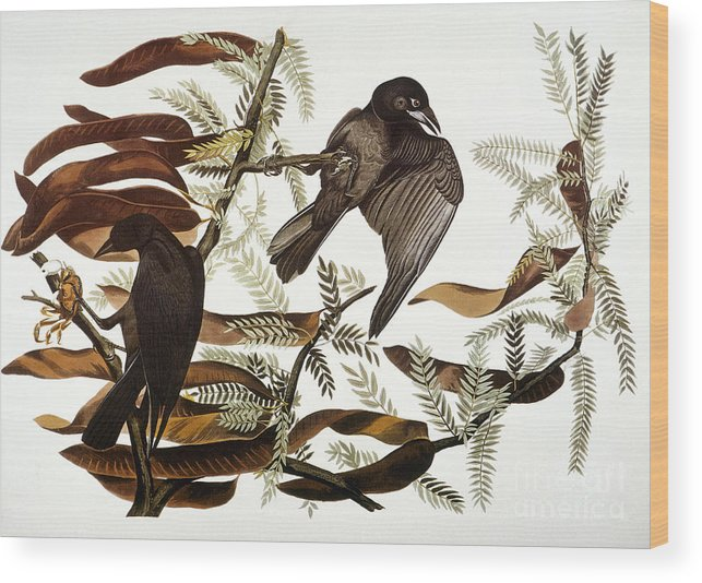 1838 Wood Print featuring the photograph Audubon: Crow by Granger