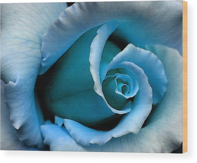Blue Rose Wood Print featuring the digital art Autumn Belle by Carrie OBrien Sibley