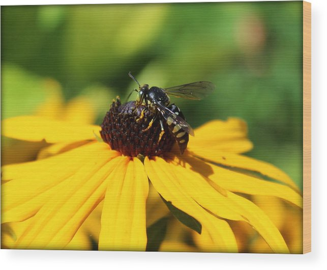 Wasp Wood Print featuring the photograph Black Eyed Susan With Wasp by Anita Hiltz
