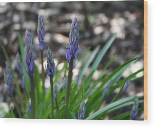 Flower Wood Print featuring the photograph Blue Bells by Beverlee Singer