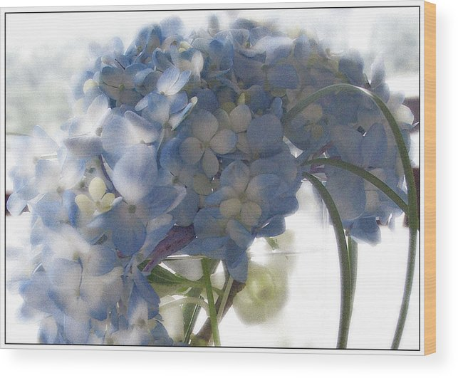 Hydrangea Wood Print featuring the photograph Blue Hydrangea by Wendy Fike