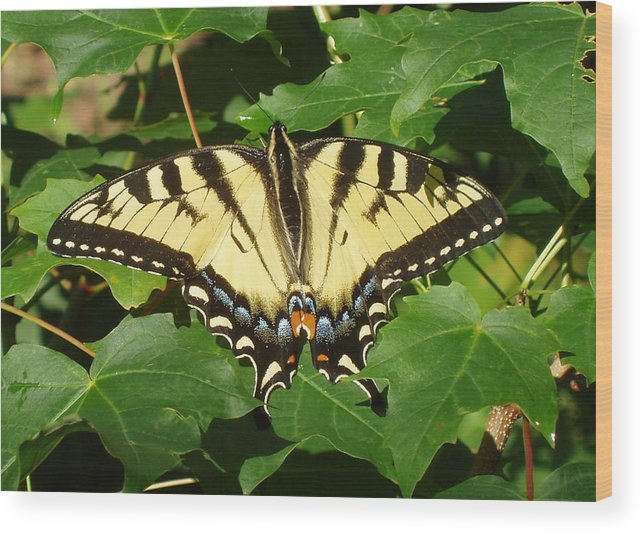 Butterfly Wood Print featuring the photograph Butterfly by Julaine DeJong