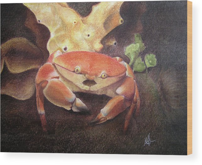 Animals Wood Print featuring the painting Coral Crab by Adam Johnson