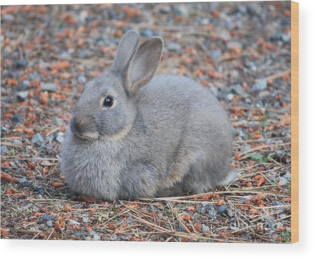 Rabbit Wood Print featuring the photograph Cute Campground Rabbit by Carol Groenen