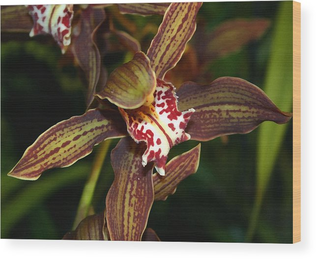 Orchid Wood Print featuring the photograph Dark Orchid by Mary Haber