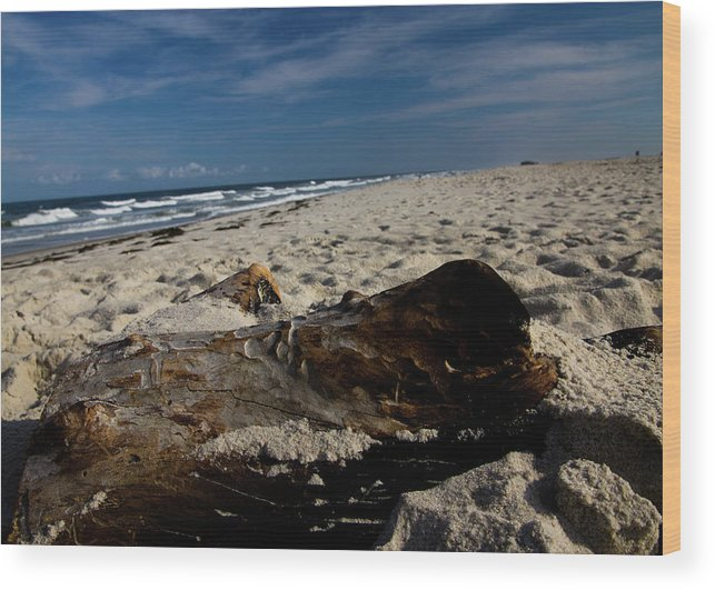 Driftwood Wood Print featuring the photograph Driftwood by Elizabeth Green