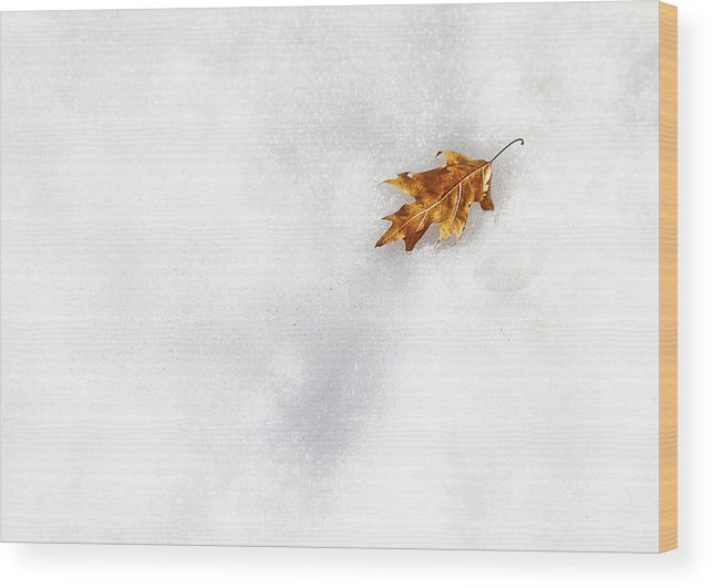 Evelina Kremsdorf Wood Print featuring the photograph Fallen by Evelina Kremsdorf