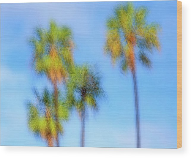 Palm Tree Wood Print featuring the photograph Family Of Four by Joseph S Giacalone