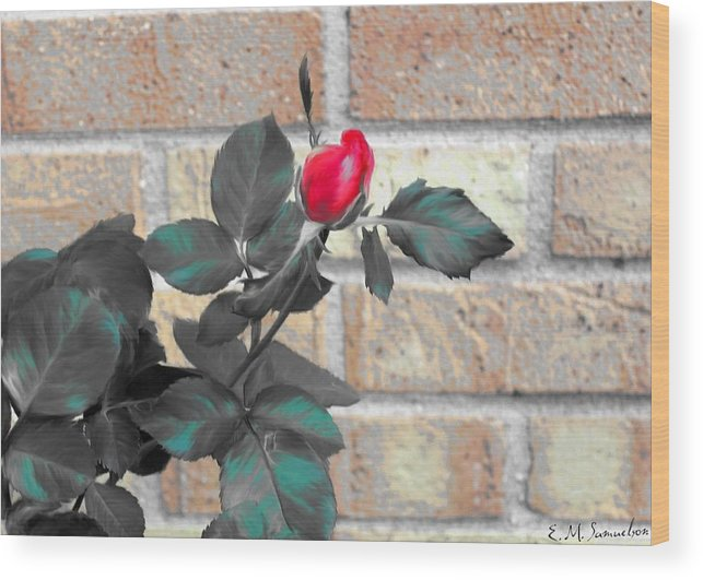 Rose Wood Print featuring the photograph Flowers And Bricks by Elise Samuelson