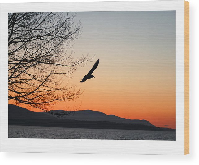 Seagull Wood Print featuring the photograph Glide by J D Banks