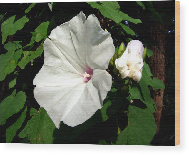 Flower Wood Print featuring the photograph Good Morning by Nicole I Hamilton